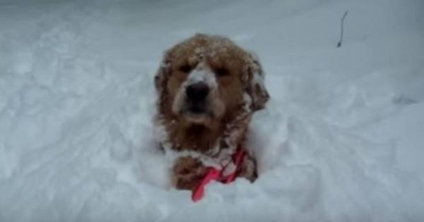 Όταν οι σκύλοι ανακαλύπτουν το χιόνι- Δείτε πως παίζουν (βίντεο)