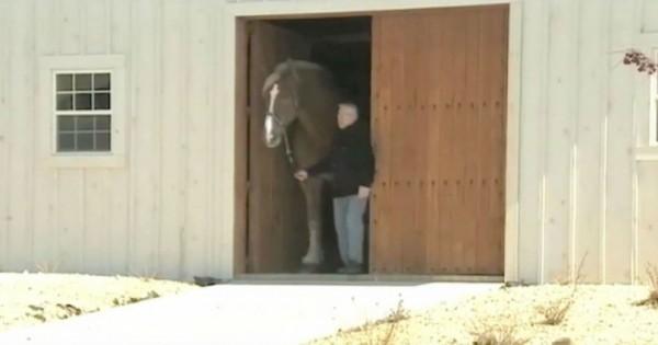 Νόμιζα πως είναι ένα συνηθισμένο άλογο, αλλά μόλις άνοιξε η πόρτα μου έπεσε το σαγόνι! (Βίντεο)