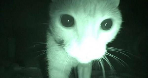 Αυτή είναι η μυστική ζωή της γάτας σας στις 3 το πρωί! (Βίντεο)