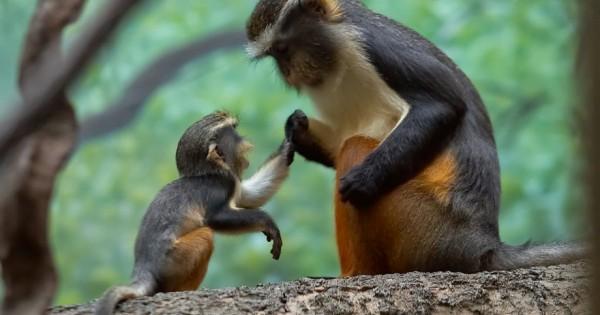 20 ζωάκια που ξέρουν πως η μητρική αγάπη είναι η πιο δυνατή στον κόσμο (Εικόνες)