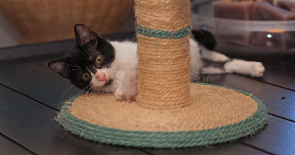 Γιατί η γάτα μου γρατσουνάει τα έπιπλα; (Εικόνες)