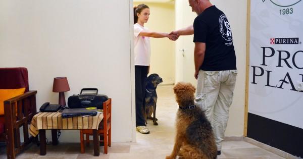 Πώς ο σκύλος μας θα αγαπά τους επισκέπτες (Εικόνες)