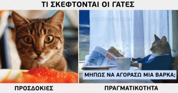 Γάτες: προσδοκίες και πραγματικότητα (Εικόνες)