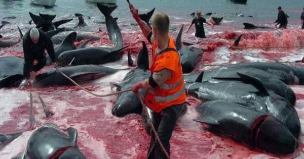 Από το Μάρτιο του 2016 η Ιαπωνία ξεκινάει και πάλι τη φαλαινοθηρία στην Ανταρκτική [φωτό]
