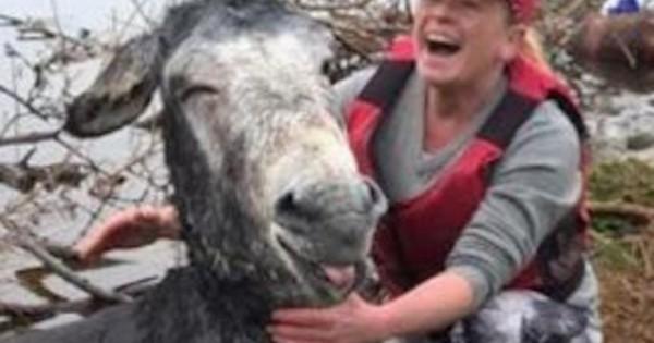 Όταν διέσωσαν αυτόν το γάιδαρο από πνιγμό τους χάρισε το ωραιότερο χαμόγελο που έχετε δει! (Εικόνες)