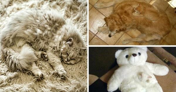 Έχεις παρατηρητικότητα; ΒΡΕΣ τη γάτα! (Εικόνες)