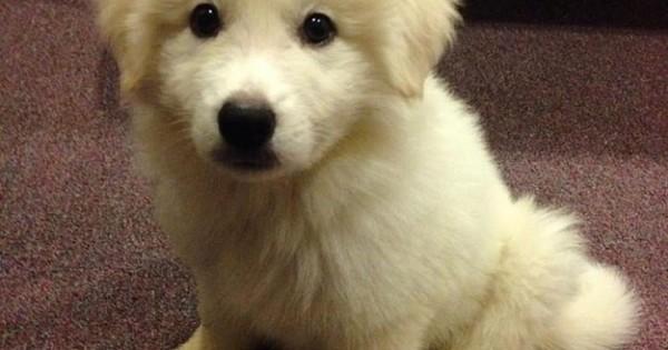 21 υπέροχα σκυλάκια που πρέπει να δείτε αμέσως! (Εικόνες)