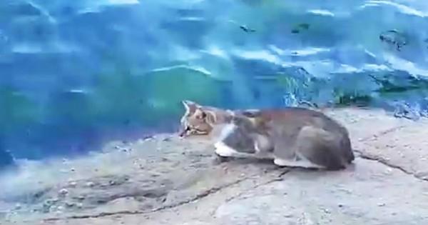 Αυτός ο γάτος πηγαίνει προς το νερό πολύ αργά. Τι κάνει μετά; Κάνει όλους να γελάσουν (Βίντεο)