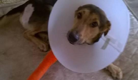 Ο Νέμο θα περπατήσει ξανά χάρη στον κτηνίατρο του Δημήτρη Λίτινα