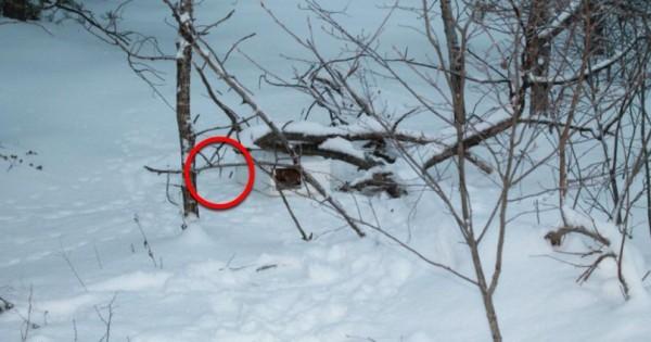 Ένα αγοpάκι έπαιζε στο χιόνι, όταν ξαφνικά σκόνταψε σε ΚΑΤΙ. Όταν το πήρε στα Χέρια του, δεν πίστευε στα Μάτια του! (Βίντεο)