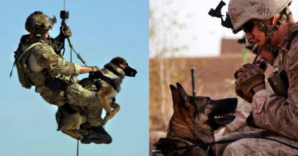 50 φωτογραφίες σκύλων που υπηρετούν στον Στρατό