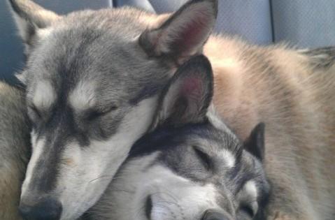 10 σκυλάκια που δίνουν στη λέξη εξάντληση την πιο γλυκιά έννοια! (Εικόνες)