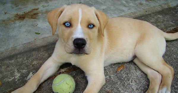 Οι 11 πανέμορφες διασταυρώσεις σκύλων (Εικόνες)