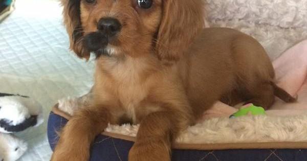 Δείτε 25 πανέμορφα σκυλιά με το πιο παράξενο Τρίχωμα που έχετε δει! (Εικόνες)