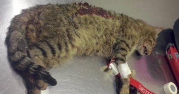 Αναζητούν τον μανιακό που πυροβολεί με αεροβόλο αδέσποτες γάτες στο Γαλάτσι