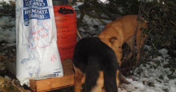 Ανέβηκαν στη χιονισμένη Πάρνηθα για να ταΐσουν τ' αδέσποτα ζώα