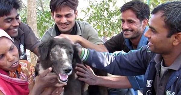 Το σκυλί που απέκτησε καινούριο πρόσωπο (Εικόνες)