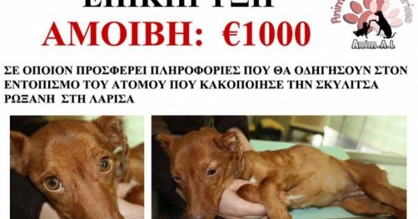 Επικήρυξαν το δράστη που κακοποίησε φρικτά τη σκυλίτσα στη Λάρισα