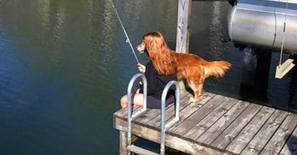 10 ράτσες σκύλων που σίγουρα δε γνωρίζετε ότι συνδέονται μεταξύ τους! (Εικόνες)