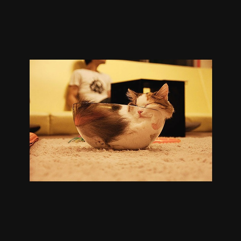 γατόνια