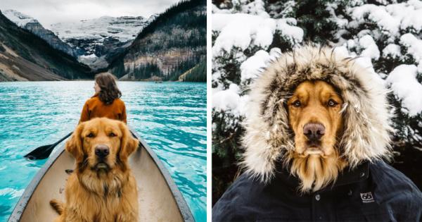Δεν ήθελαν να αφήσουν το σκύλο κλεισμένο στο σπίτι, έτσι τον πήραν μαζί, σε μία φοβερή περιπέτεια! (Εικόνες)