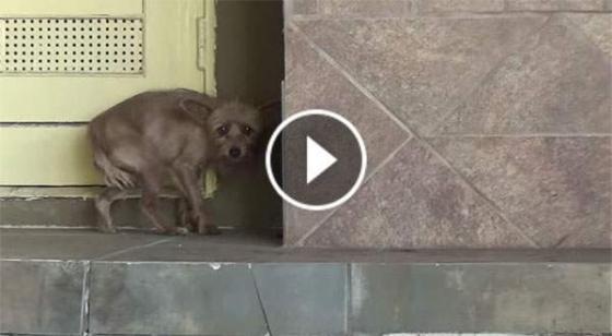 Αυτό το σκυλάκι φοβάται τους ανθρώπους. Αλλά όταν το σώζουν; Θα σας ραγίσει την καρδιά. (Βίντεο)