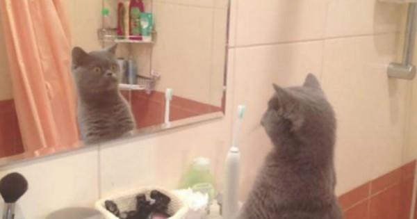 Αυτός ο πανέμορφος γάτος λατρεύει να θαυμάζει την αντανάκλασή του στον καθρέπτη! (Βίντεο)