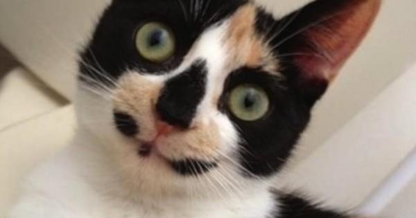 30 σπάνιες γάτες με πολύ ασυνήθιστα σημάδια. Ειδικά το 8 έχει μια πολύ διαφορετική ομορφιά! (Εικόνες)