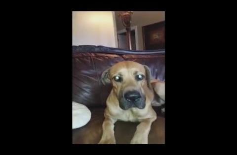 Όσο και να το έκρυβε στο στόμα του, το μυστικό αυτού του «ένοχου» σκύλου αποκαλύφθηκε! (Βίντεο)