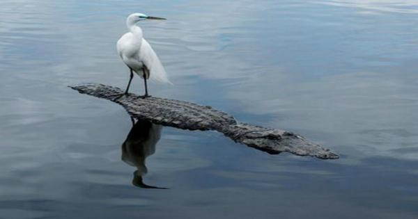 13 Ατρόμητα Ζώα που Αποδεικνύουν ότι το Μέγεθος ΔΕΝ Μετράει. (Εικόνες)