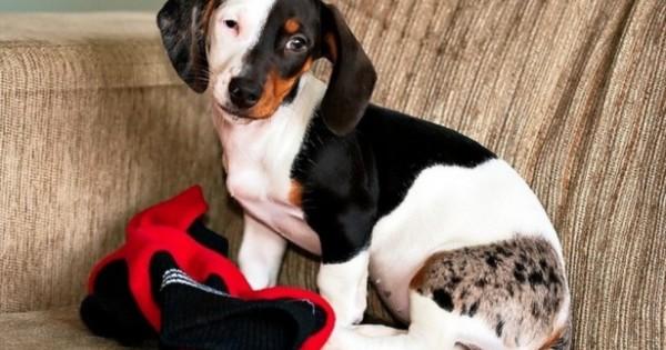 28 σκυλιά με ασυνήθιστα σχέδια στο τρίχωμά τους. Ειδικά το 12 θα το ερωτευτείτε! (Εικόνες)