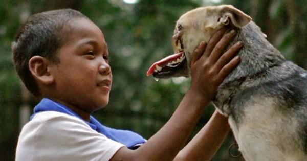 Σκύλος έγινε ήρωας, θυσιάζοντας όμως τη μουσούδα του…(Βίντεο)