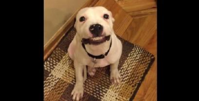Το χαμόγελο του πίτμπουλ (Βίντεο)