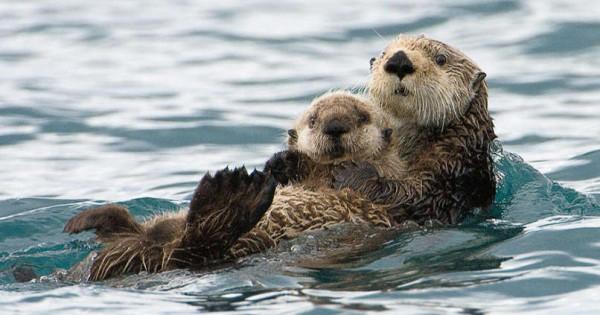 Συγκλονιστικές φωτογραφίες με ζωάκια που αποδεικνύουν πως η αγάπη του γονιού βρίσκεται παντού!(Φωτογραφίες)
