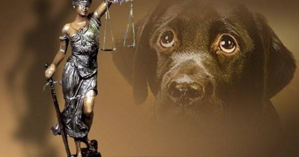 Με εντολή του Αρείου Πάγου η πιστή τήρηση του αυτοφώρου και άμεση δίκη όσων συλλαμβάνονται για εγκλήματα κατά των ζώων.