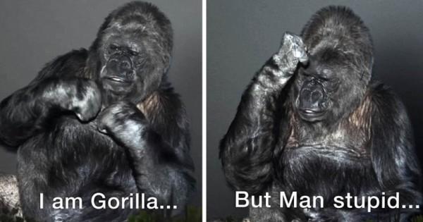Το συγκλονιστικό μήνυμα από έναν γορίλα: «Οι άνθρωποι είναι ηλίθιοι, καταστρέφουν την γη» (Βίντεο)