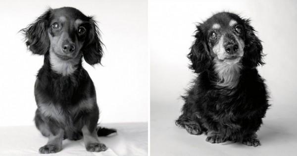 Πως γερνούν οι σκύλοι: ένα φωτογραφικό project που θα σας συγκινήσει! (Εικόνες)