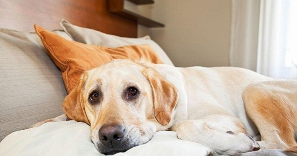 Ξενοδοχείο θεωρεί τους σκύλους πιο ευπρόσδεκτους από τους ανθρώπους (Εικόνες)
