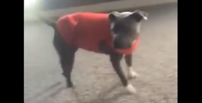 Ο σκύλος μιμείται ακροβατικά ενός μικρού κοριτσιού (Βίντεο)