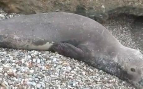 Μία μονάχους μονάχους σε παραλία του Φαλήρου (Βίντεο)