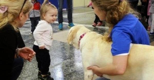 «Χαμόγελο του Παιδιού»: Οκτώ σκυλιά στον οργανισμό για να βρίσκουν τα εξαφανισμένα παιδιά