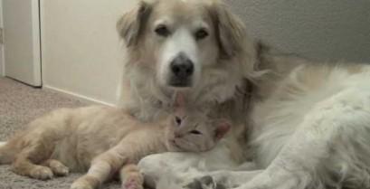 Γάτα και σκύλος σε τρυφερές στιγμές (Βίντεο)