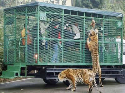 Ζωολογικός κήπος έκλεισε τους ανθρώπους σε κλουβί (ΦΩΤΟ)