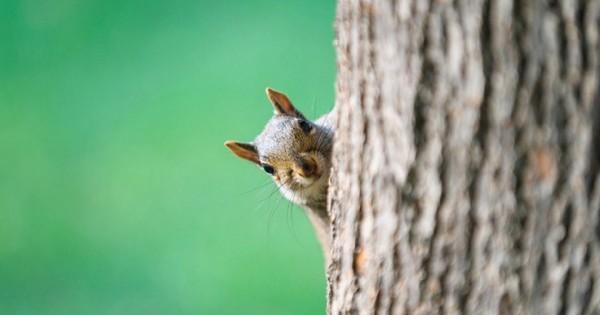 Ζώα που εργάστηκαν ως… κατάσκοποι! (Εικόνες)