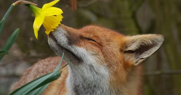 Αξιολάτρευτες εικόνες με ζώα που… μυρίζουν λουλούδια (Εικόνες)