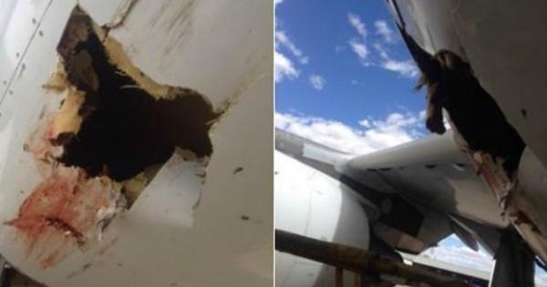 Σύγκρουση με πουλί άνοιξε τρύπα σε αεροπλάνο! (pics)