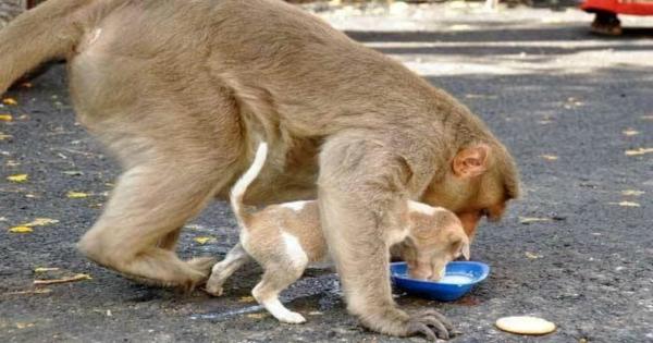 Μαϊμού υιοθετεί Κουτάβι και του Μαθαίνει Βασικές Τεχνικές Επιβίωσης. (Εικόνες)