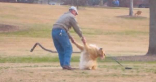 Ο πιο τεμπέλης σκύλος του κόσμου αρνείται να αφήσει το πάρκο και η αντίδρασή του προκαλεί γέλιο (Βίντεο)