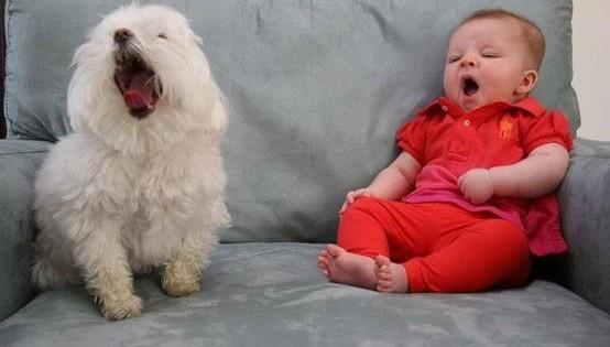 10 σκύλοι που χασμουριούνται και θα σας κάνουν και εσάς να νυστάξετε σίγουρα (Εικόνες)