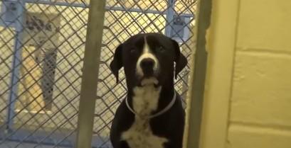 Σκύλος σε καταφύγιο τρελαίνεται από τη χαρά του όταν τον υιοθετούν (Βίντεο)